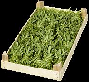 Rucola Deutschland - 1,00 kg Kiste