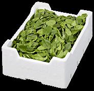 Babyspinat Italien - 1,00 kg Kiste