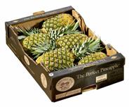 Ananas Sweet 6 Stück Kiste