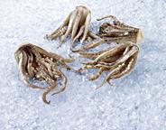 Kalmarzöpfe je kg