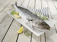 Adlerfisch 1,2 - 1,8 kg