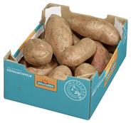 Süßkartoffel Weiß aus den USA - 6,00 kg Kiste