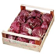 Radicchio Italien - 3,00 kg Kiste