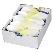 Chicoree Deutschland - 5,00 kg Kiste