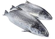Horeca Select Bömlo Lachs ca. 6 - 7 kg Stücke, ausgenommen, ohne Haut, mit Kopf, TRIM C 20 kg