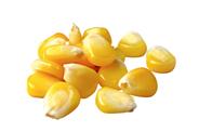 Horeca Select Gemüsemais tiefgefroren, küchenfertig, erntefrisch 2,5 kg Beutel