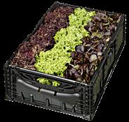 Salatmix aus Italien 9er Kiste
