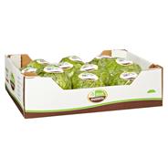 Eisbergsalat 10 Stück Kiste