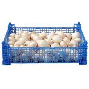 Champignons middel 2,5 kg