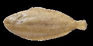 NZ TONG KL/M 02-03 KG