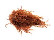 Prins & Dingemanse Roodhoorntjeswier 500 gram