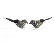 Kaemingk Vogel op clip groen