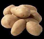 Horeca Select Nicola aardappelen 4 x 5 kg