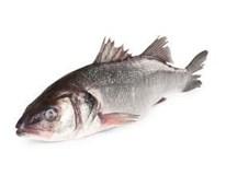 Vlk mořský kuchaný chlaz. váž. 1x cca 1-2kg
