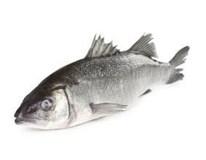 Mořský vlk nek. 400-600g chlaz. Friulpesca S.R.L.