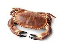 Krab německý živý váž. 1x cca 800-1200g