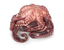Chobotnice obecná vařená chlaz. váž. 1x cca 0,5-1kg