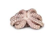 Chobotnice obecná chlaz. váž. 1x cca 0,9-1,8kg