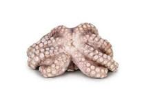 Chobotnice malá mraž. 1x1kg
