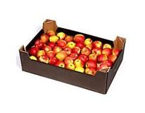 Jablka Gala Must 65/75 čerstvá 1x13kg karton
