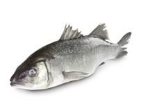 Vlk mořský chlaz. váž. 1x cca 1-1,5kg