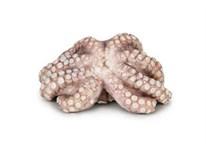 Chobotnice vařená hlavy chlaz. váž. 1x cca 50-100g