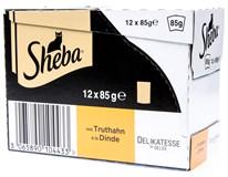 Sheba krůtí v želé pro kočky 12x85g