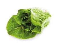 Salát Little Gem zelený I. čerstvý 1x2ks