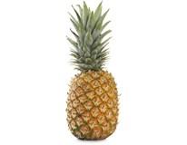 Ananas Sweet Gold 1000+ CI/GH čerstvý 1x10ks