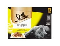 Sheba drůbeží v želé pro kočky 12x85g