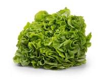 Salát dubový zelený 175g+ čerstvý 1x1ks fólie