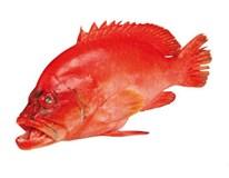Kanic červenohnědý chlaz.váž. 1x cca 1kg