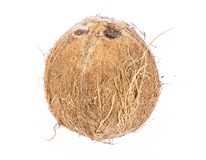 Kokosový ořech 400+ CI čerstvý 1x1ks