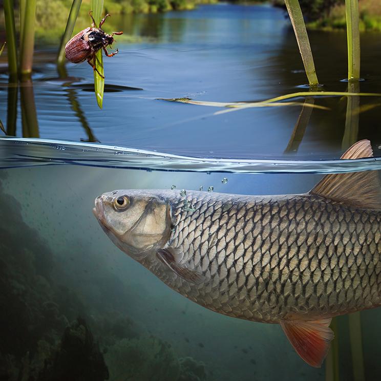 сладководна риба