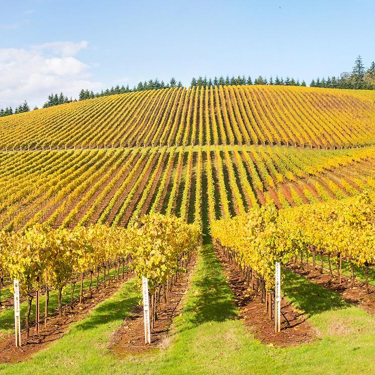 Вино от новия свят