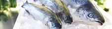 ventajas del pescado congelado