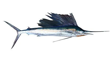 pescado azul espada