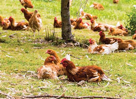 La démarche des œufs alternatifs