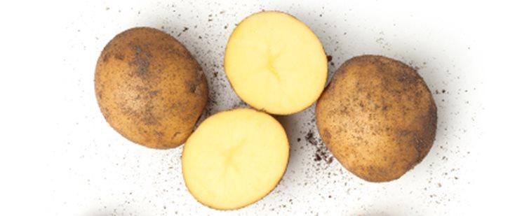 krumpir448x186