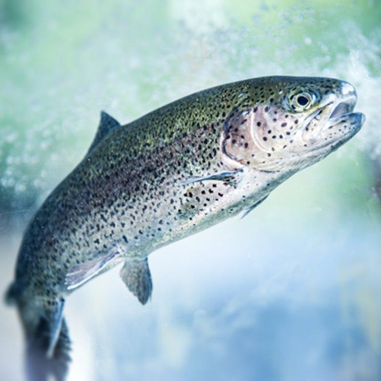 rjecna riba image