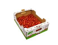 Rajčiny cherry Dubino 15/20 čerstvé 1x3 kg