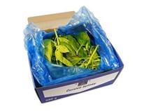 Horeca Select Bazalka pravá čerstvá 1x500 g kartón