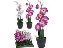 Orchidea v kvetináči 20x10x47cm 1ks