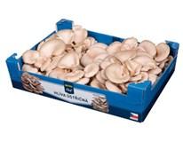 Horeca Select Hliva ustricová čerst. 1x1,5 kg nevratný kartón