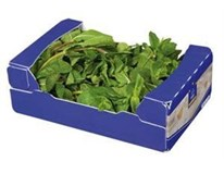 Horeca Select Mäta čerstvá 1x250 g kartón