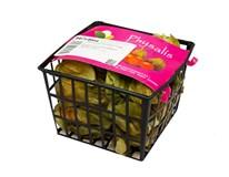 Mochyňa/Physalis čerstvá 1x100 g vanička