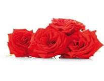 Jedlé kvety ruže čerstvé 1x40 g vanička