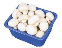 Šampiňóny biele 40/50 čerstvé 1x500 g vanička