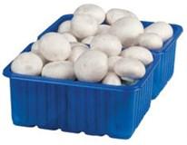 Šampiňóny biele 40/55 I. čerstvé 1x1 kg vanička
