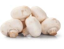 Šampiňóny biele na gril čerstvé 6-8ks 1x500 g vanička